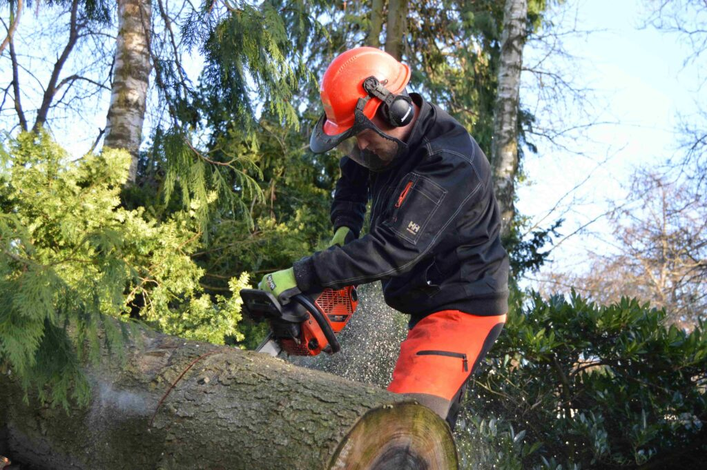Fagmand i fuldt udstyr beskærer et stort træ med motorsav stående