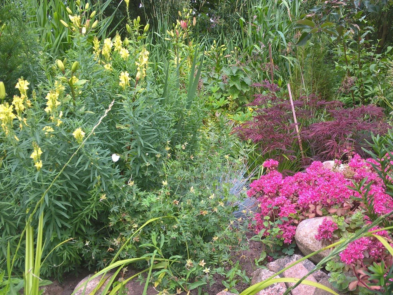 Regnvandsbed placeret i haven med staudebed omkring sig, opbygget af en masse grønne planter og pink blomster